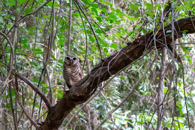 Милая сова на ветке дерева