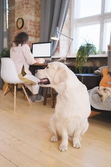 그녀가 집에서 온라인으로 컴퓨터에서 작업하는 동안 소유자를 기다리는 귀여운 애완 동물