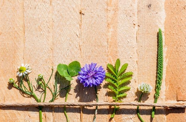 かわいい絵、開花ヤグルマギク、オオバコ、カモミール、クローバーの夏のバタニカ。村の暑い日。