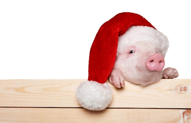 Cute piglet animal in santa hat hanging on a fence