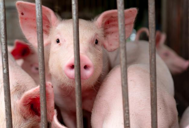 農場でかわいい子豚。幸せで健康な小さな豚。畜産。食肉産業。動物肉市場。