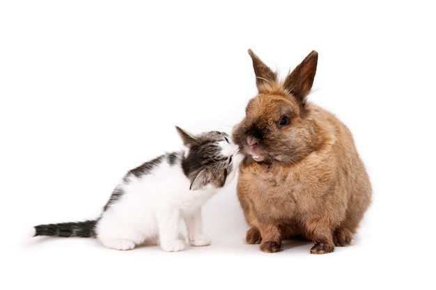 Милый игривый котенок с любопытством нюхает мордочку коричневого пушистого кролика на белой поверхности