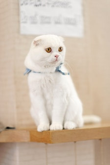Cute and playful pet cats sitting in the house, faithful lover's concept