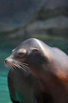 Cute playful sea lion