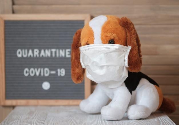 テキスト検疫covid-19の看板の上に医療マスクでかわいいぬいぐるみ犬ビーグル犬。コロナウイルスとの戦いの避妊