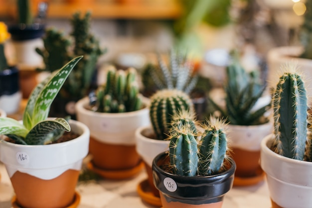 Cute and pretty succulents and cacti in handmade clay pots on sale in plant flower shop or concept store.