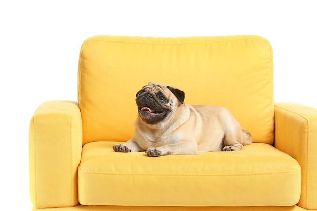 Милая собака мопса на кресле