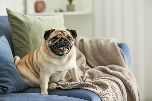 Милая собака мопса на диване у себя дома