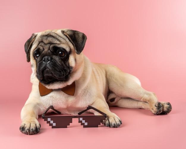 ピンクの壁にピクセルメガネとかわいいパグ犬