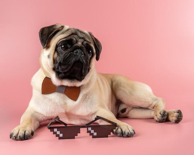 ピンクのピクセルメガネとかわいいパグ犬。