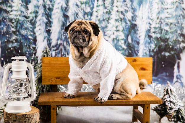 Милый мопс в свитере на скамейке