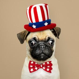 アンクルサムの帽子と蝶ネクタイでかわいいパグ子犬