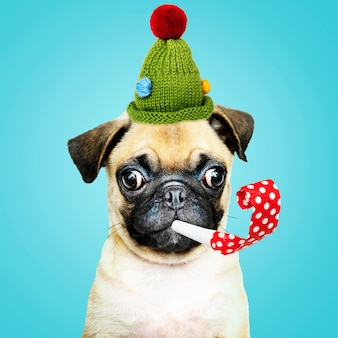Cute pug wearing a green bonnet with a party horn