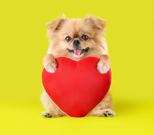 Симпатичные щенки померанский шпиц смешанной породы пекинес собака сидит, обнимая подушку в форме красного сердца, изолированных на зеленом фоне на день святого валентина.