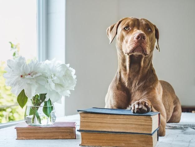 かわいい子犬とヴィンテージの本。スタジオ写真