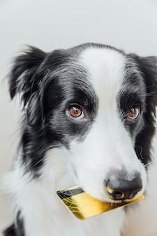 Милый щенок бордер-колли, держащий во рту кредитную карту золотого банка, изолированную на белом