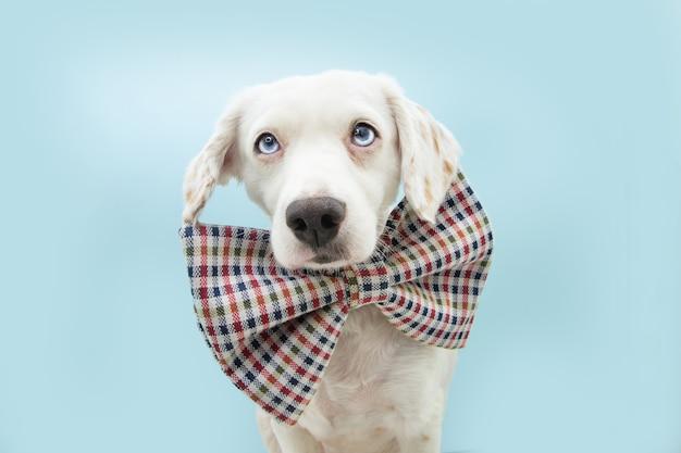 체크 무늬 나비 넥타이를 입고 생일이나 카니발을 축하하는 귀여운 강아지. 블루 파스텔 배경에 고립