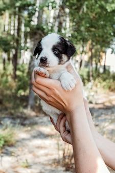 Милый щенок в женских руках.