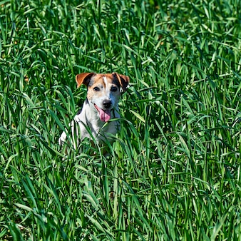 Cute puppy sits in tall green grass with copy space