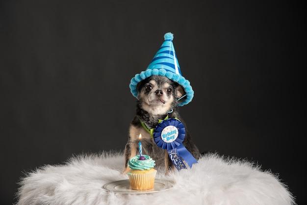 Simpatico cucciolo seduto su una sedia soffice con un cappello di compleanno, una spilla e un cupcake con una candela