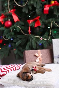 크리스마스에 베개에 자는 귀여운 강아지