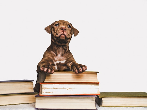 Cute puppy and vintage books. back to school