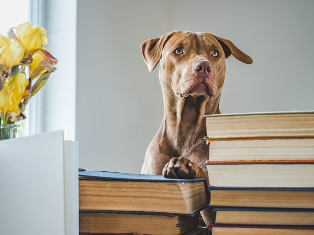 Cute puppy and vintage books.