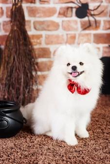 Grazioso cucciolo che indossa un farfallino rosso