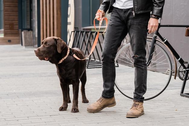 ひもにつながれたかわいい純血種の犬とカジュアルな服装で飼い主が都会の寒冷時にトロトワールの上に立っています。