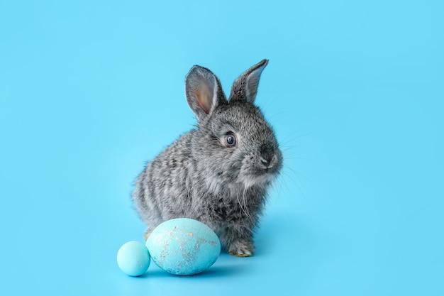 Милый кролик и пасхальные яйца на цвете