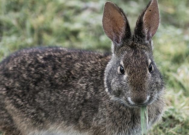 Simpatico coniglio che mangia erba in giardino