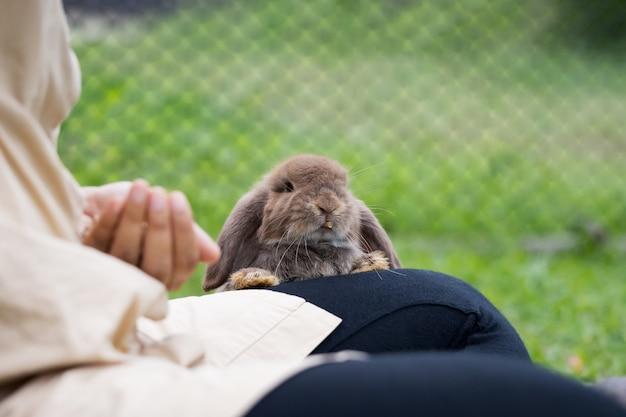 소유자 여자 손에서 펠렛 음식을 먹는 귀여운 토끼. 초원에서 음식을 먹는 배고픈 토끼. 토끼에게 먹이를 주는 주인. 부활절 토끼와의 우정.