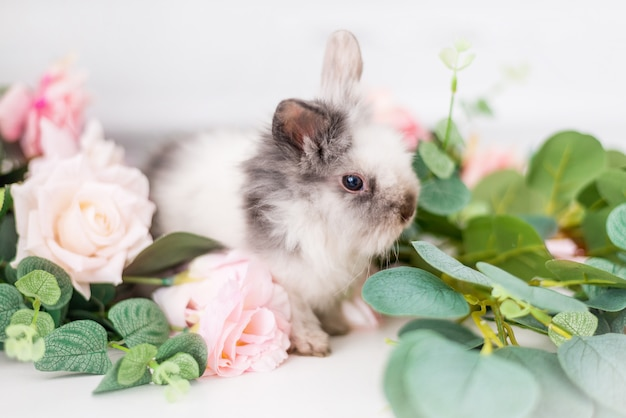 Cute rabbit in flowers on a white background. fluffy easter bunny