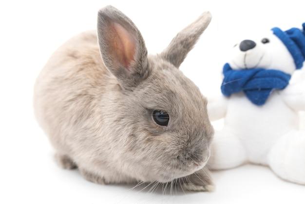 Милый кролик серый сидит возле мягкой игрушки на белом фоне