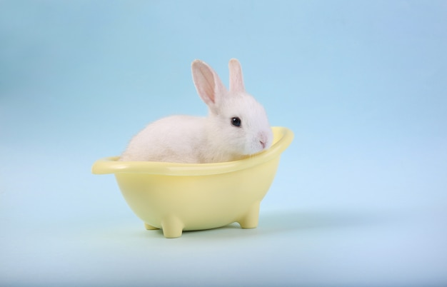 A cute rabbit isolated