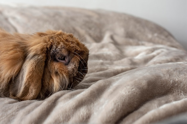 Cute rabbit laying in bed