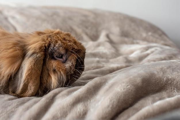 Coniglio carino sdraiato a letto