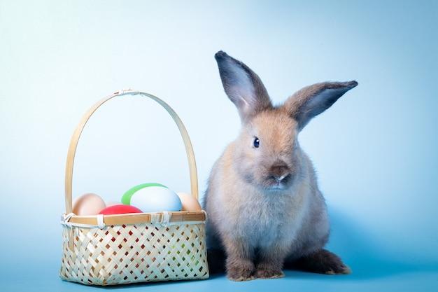 귀여운 토끼, 부활절 달걀과 밝은 갈색 모피. 파란색 배경입니다. 척추 동물은 포유류입니다. 부활절 개념.