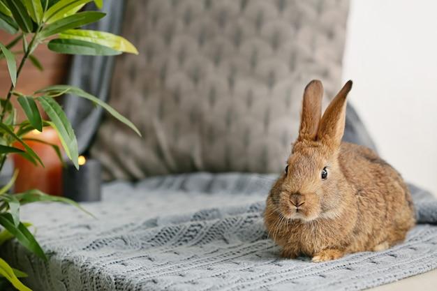 Милый кролик на столе в комнате