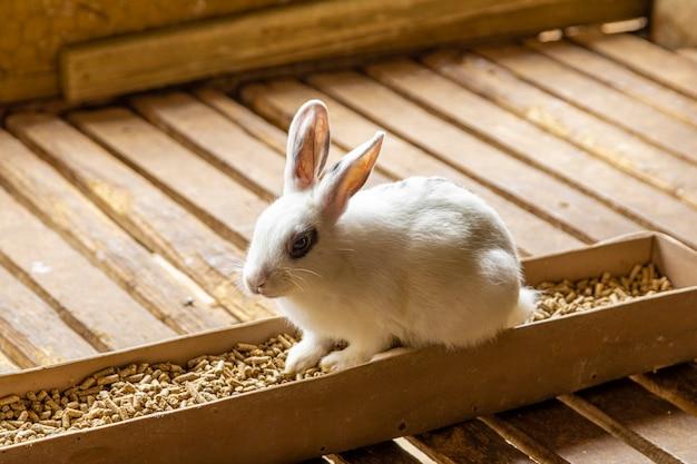 フードポットに座っているかわいいウサギ。