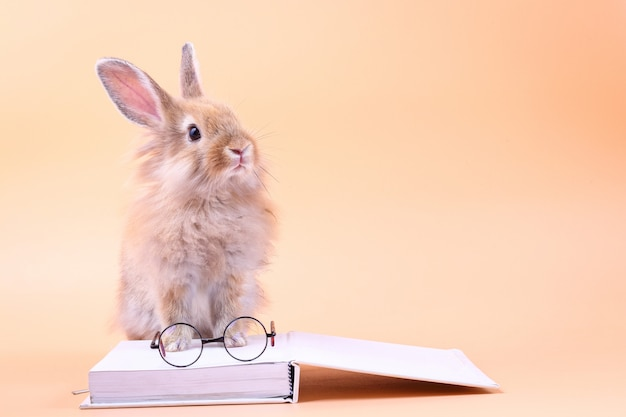 Cute rabbit sitting on a white book with glasses placed
