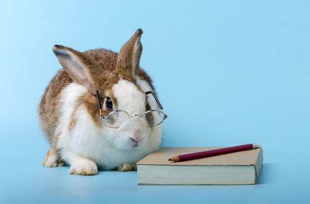 Cute rabbit with glasses sitting beside the brown book on blue background.