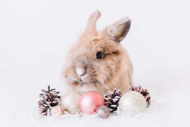 Cute rabbit with shiny baubles