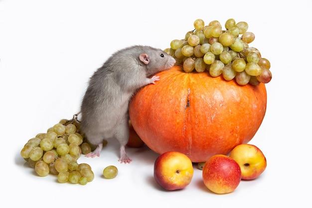 과일 및 야채와 함께 귀여운 쥐 덤보입니다. 포도, 호박, 천도 복숭아. 쥐-구정의 상징