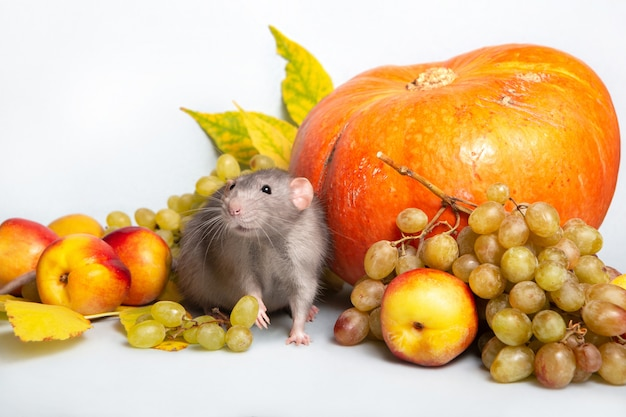 Cute rat dumbo with fruits and vegetables. grapes, pumpkin, nectarines. rat - a symbol of the chinese new year