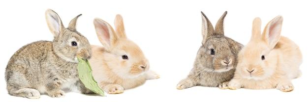 かわいい赤と灰色のイースターウサギ
