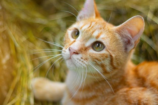 かわいい赤猫がフレームに見えます。