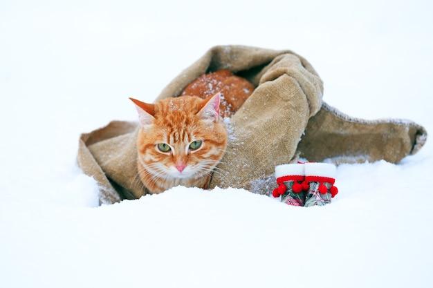 雪の背景に毛布で包まれたサンタの帽子とかわいい赤い猫