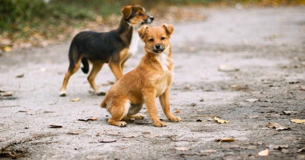 거리에서 카메라를보고 귀여운 빨간 개