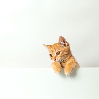 Милый рыжий котенок на белом фоне. игривый и веселый питомец. скопируйте пространство.